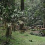 Bedugul Botanical garden (Kebun Raya Eka Karya)