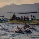 Dolfijn spotten op Bali