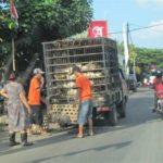 Kippen handel op Bali