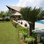 Palmbomen op Bali