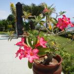 Huisje met buitendouche op Bali resreveren